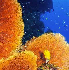 Project Aware Coral Reef